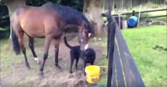 Hond-en-paard-zijn-vrienden