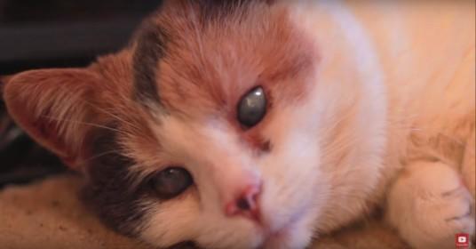 Blinde-kat-dag-van-zijn-leven