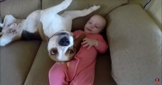 Hond-babysitter