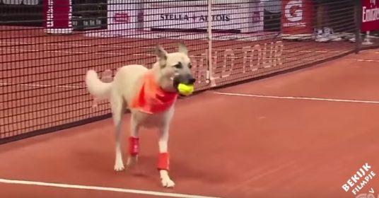 Ballen-honden-brazil-open-bewustzijn