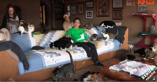 vrouw-verzorgt-honderden-katten