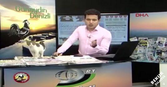 Zwerfkat-live-uitzending-springt-op-tafel
