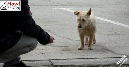 Redding-bange-hond
