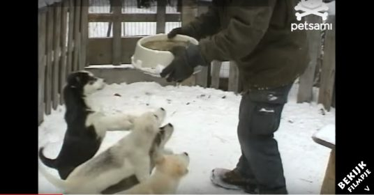 hondjes-voer