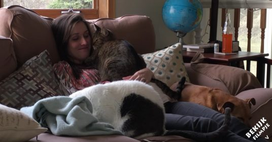 katten-voelen-zwangerschap-aan