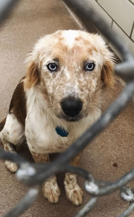 Vrouw Wordt 25 Jaar En Adopteert Een Hond Nu Neemt Ze Foto S Van