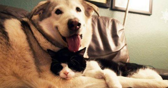 hond-kitten-vriendjes