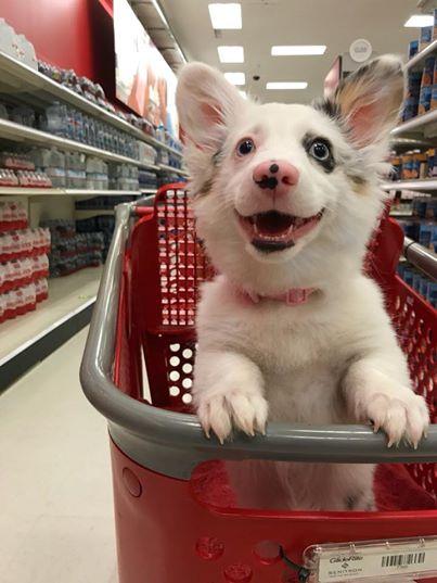 hond-winkelen1