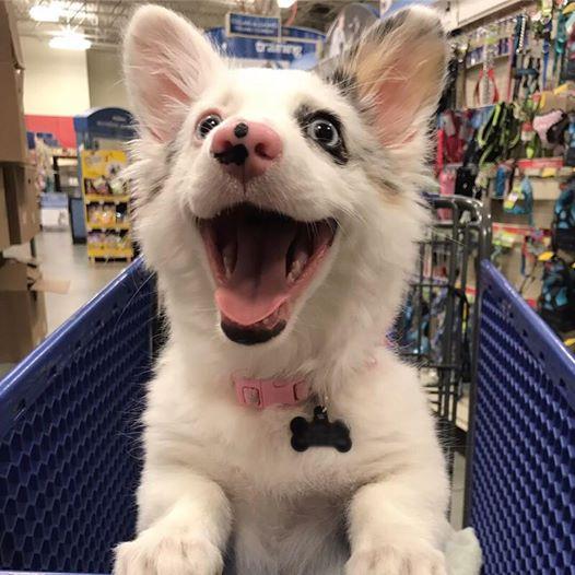 hond-winkelen2