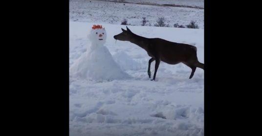 sneeuwpop-hert