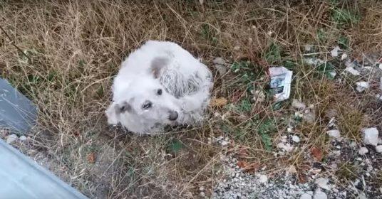 gered-hondje