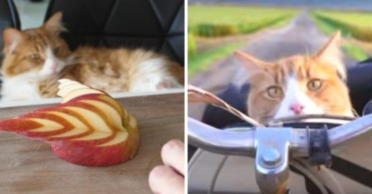 katten-