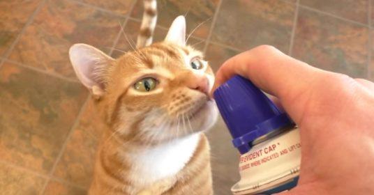slagroom-kat