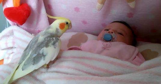 vogels-babies