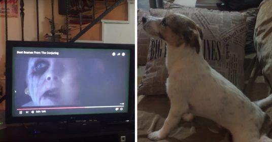 hond-horrofilm
