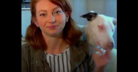 blinde-dove-hond