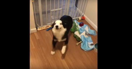 hond-dansje