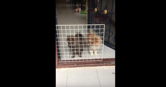 honden-hekje