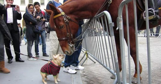 paard-hondje