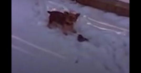 vogel-hond