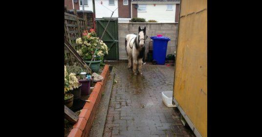 pony-in-tuin
